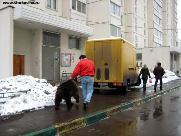 Отлов медведей в Кожухово