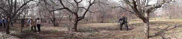 Панорама Яблоневого сада