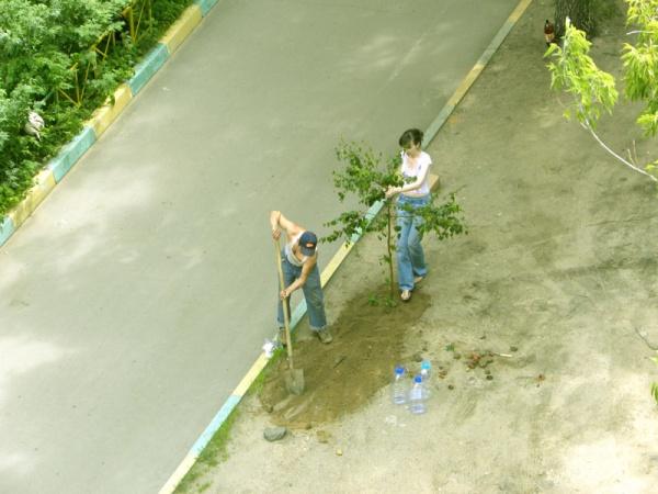 Сажаем дерево 2