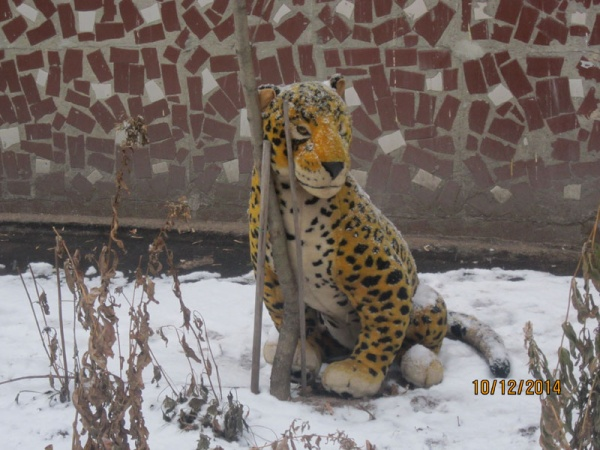 Жалко тигру)