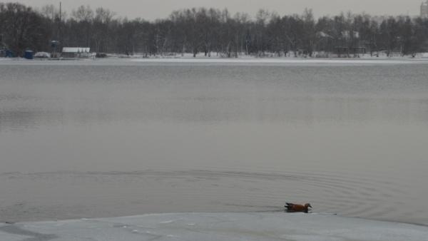 О?гарь, или кра?сная у?тка на Белом озере - 2