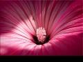Немного розового