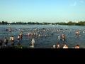 Белое озеро. Пляжники 2015.-10
