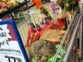 """Внимание! В 7-ом континенте снижены цены на """"котят в древесном угле""""!)"""