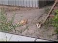Вторая проблема - бездомные котята, коих вывелось десяток.